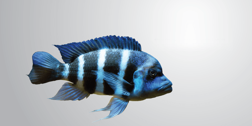 3-slider_scientifish